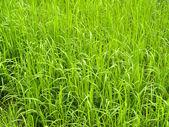 Grass background Green Grass — Stock Photo
