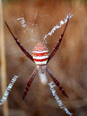 Photo of a big spider — Stock Photo