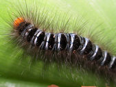 Caterpillar on a branch — Stock Photo