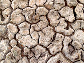 Dry and cracked earth background — Stock Photo