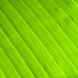 Banana leaf - Stock Photo