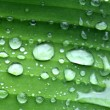 Banana leaves and drop water Banana leaves background — Stock Photo