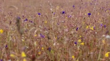 Wild Flowers Field — Stock Video