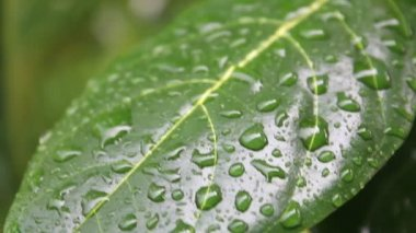 Nature of Rain and Leaf — Stock Video