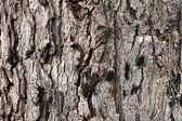 Wood texture background — Stock Photo