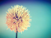 Beautiful flower in filter images — Stock Photo