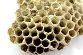 Bee Hive honey  — Stock Photo