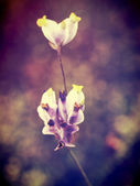 Beautiful flower in filter images — Fotografia Stock