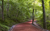 Road in the woods — Stock Photo