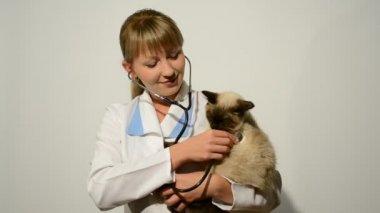 Veterinary doctor — Stock Video