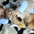 Stock Video: Girl hugging to many pets