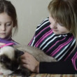 Mother and daughter combed her cat — Stock Video
