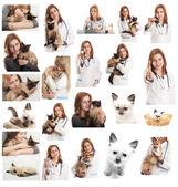 Veterinary doctor — Stock Photo