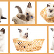 Stock Photo: Funny kitten