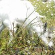 Fluffy goat eating grass in a meadow — 图库视频影像