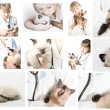 Veterinary doctor — Stock Photo #29964265