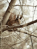 Squirrel on a branch — Stock Photo