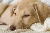 Puppy box breaks — Stock Photo