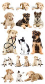 Puppy looks — Stock Photo