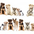 Set pets — Stock Photo