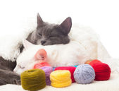 Two cats and coils with multi-colored threads — Stock Photo