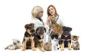 Veterinarian and cat and dog — Stock Photo