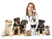 Veterinarian and set of pets — Stock Photo