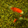 Beautiful fishes in an aquarium — Vídeo de stock #13217446