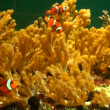 Beautiful fishes in an aquarium — Vídeo de stock #13217803