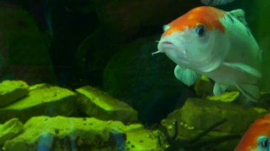 Beautiful fishes in water — Stock Video