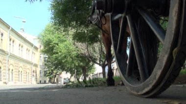 Horse cart on the road — Stock Video