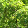 Green vegetation — Stock Video #15854593