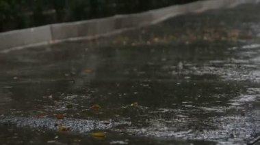 Droppar av smält vatten — Stockvideo