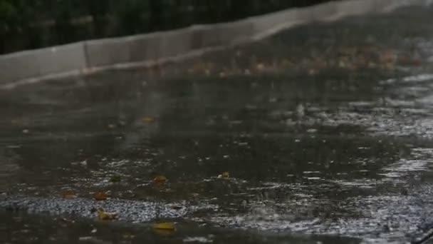 Gotas de agua derretida — Vídeo de stock