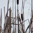 Thickets of reeds — Stock Video
