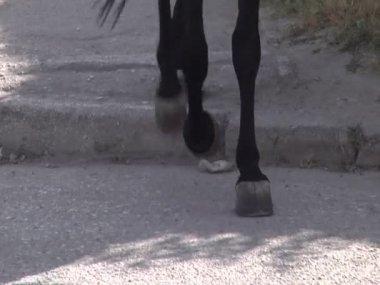 копыта лошадей на асфальте — Стоковое видео