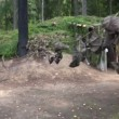 Stock Video: Military camp in woods