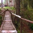 Wooden bridge across the stream in the forest — Stock Video