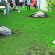 Stock Video: Art object. hemisphere on lawn