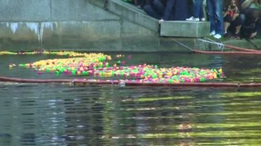 Rubber toy ducks floating on the river — Stock Video