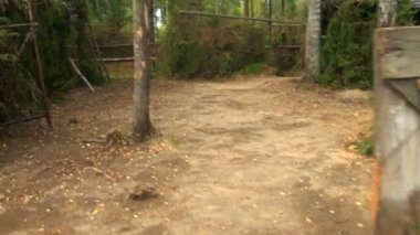 Military camp in the woods — Video Stock