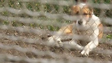 A dog behind the bars — Stock Video