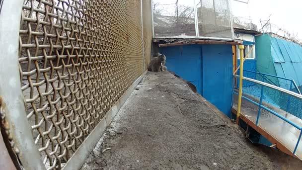 Gato gris va a lo largo de la red — Vídeo de stock