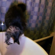 Cat Drink Water From Under Crane — Stock Video #41298947