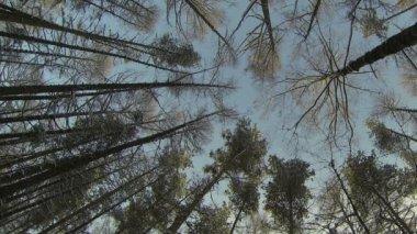 Zimní les — Stock video
