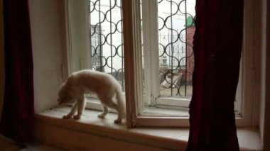 Little Red-Haired Kitten on the window — Vídeo de stock
