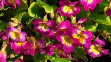 Blomma på nära håll — Stockvideo