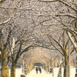 Winter pathway, Edinburgh, Scotland — Stock Photo #19965511