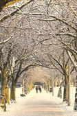 Winter pathway, Edinburgh, Scotland — Stock Photo