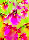 Bright color background with pink flowers — Stock Photo